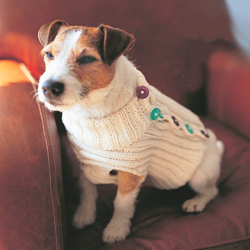 Button-up Dog Sweater Knitting Pattern