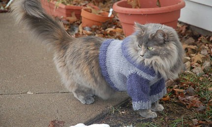 Cat Hoodie Knitting Pattern