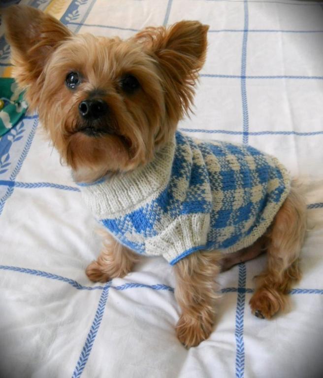 Check Dog Sweater Knitting Pattern