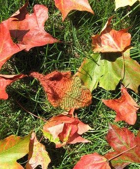 Leaf Knitting Pattern