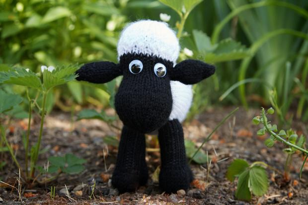Sheep Knitting Pattern Photos