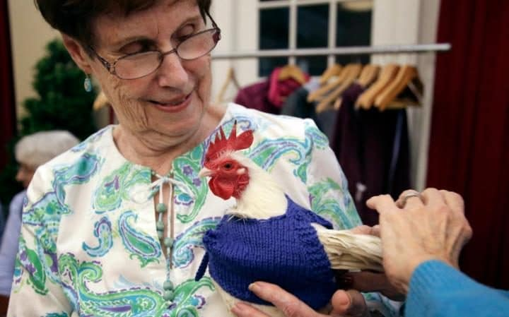 knitted-jumpers-for-chickens